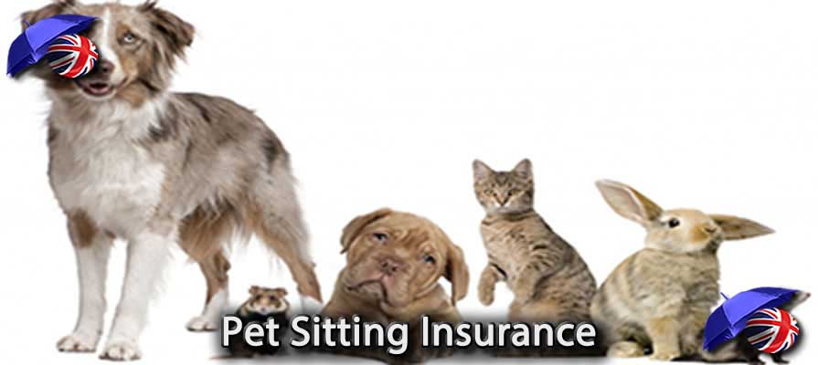 Pet Sitting Insurance UK Image