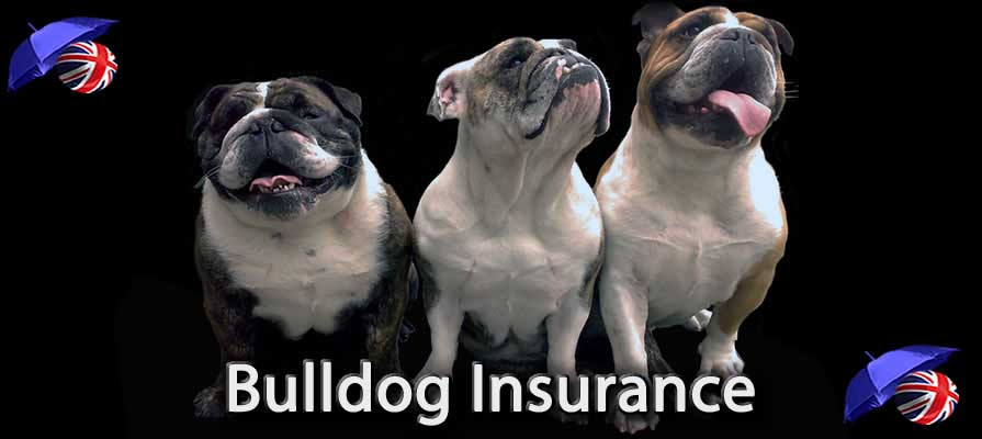 Image of the Bulldog Insurance in the UK