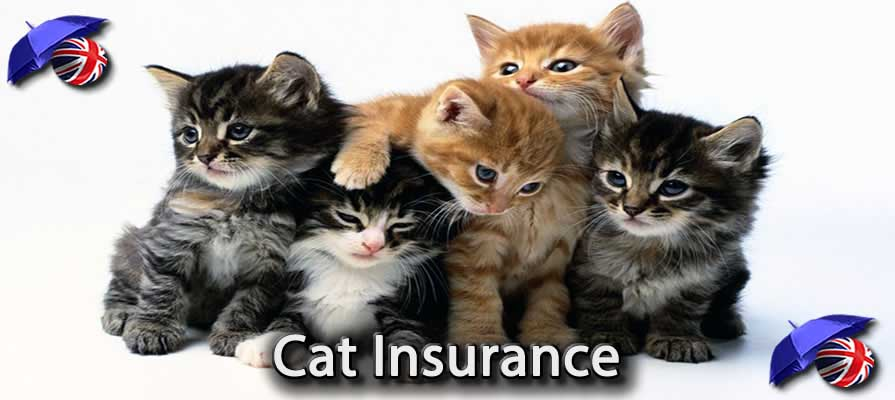 Image of the Cheapest Cat Insurance in the UK