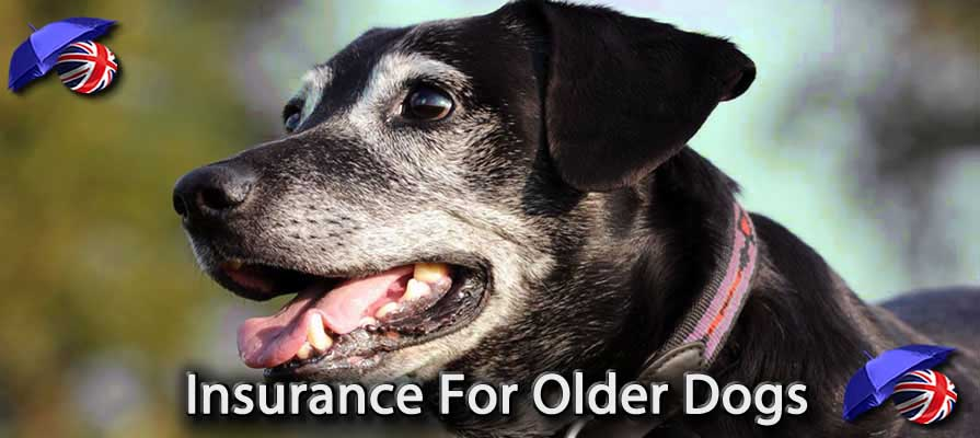 Image of the Dog Insurance For Older Dogs in the UK