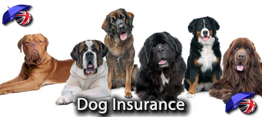 Image of the Best Dog Insurance in the UK