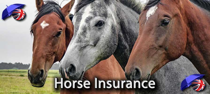 Image of the Cheap Horse Insurance in the UK