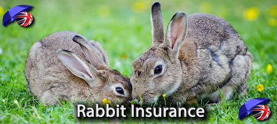 Image of the Pet Insurance for Rabbits in the UK